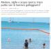 Meduse, alghe e acqua sporca: mare pulito con le barriere galleggianti?
